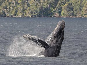 11 Day Pumas, Penguins, and Whales Tour in Magallanes Region, Chile