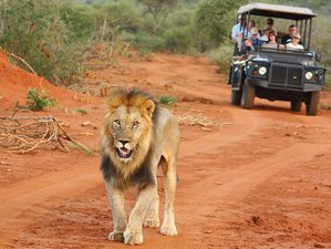 4 Days Family Safari South Africa