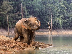 3 Days Khao Sok National Park Wildlife Safari in Thailand