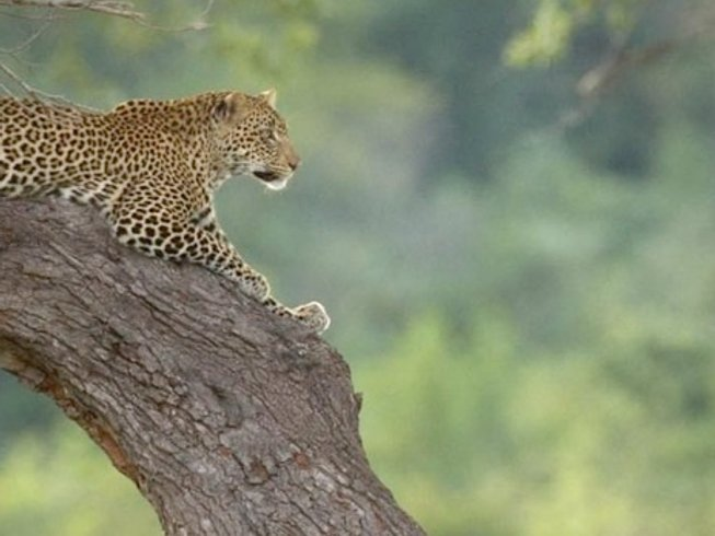 14 Days Wildlife Tours and Safari South Africa