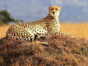5 Days Private Safari in Kenya