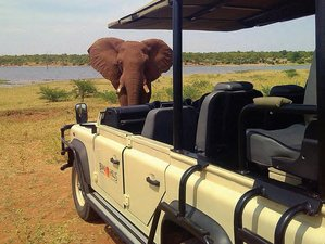 11 Days Conservation & Culture Safari Zimbabwe
