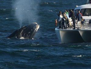 14 Days Safari and Whale Watching Holiday