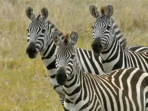 5 Days Best of Northern Tanzania Breathtaking Safari