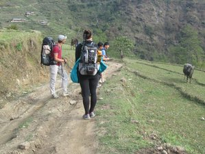 3 Days Wildlife Safari in Koshi Tappu Wildlife Reserve, Nepal