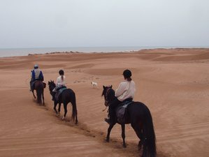 6 Day The Pearl of Essaouira Horse Riding Holiday in Diabat
