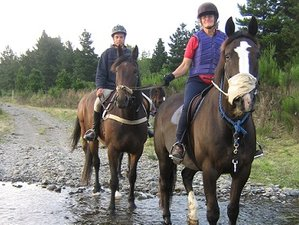 8 Days Riding Lessons and Guided Farm Trekking Horse Riding Holiday in New Zealand
