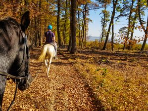 3 Days Center-Based Horse Riding Holiday in Picturesque Village of Viscri, Transylvania, Romania