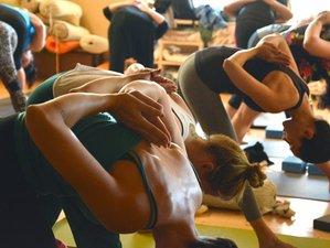 Self-Paced 200 Hours Online Hatha Multi-style Yoga Teacher Training