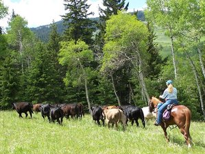 6 Day Open Range Cattle Drive Ranch Vacation in Bighorn Mountains, Wyoming