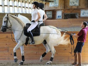 3 Day Establishing Fundamental Dressage Skills Riding Package in Merrimac, Massachusetts
