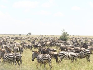 7 Days Tarangire, Serengeti, Ngorongoro Crater, and Lake Manyara Epic Mid-Range Safari in Tanzania