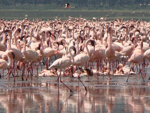 6 Days Manyara, Ngorongoro, and Serengeti Budget Group Safari in Tanzania