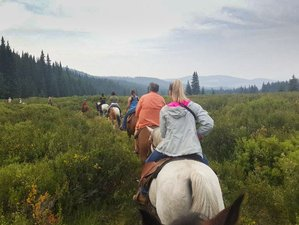 4 Day Horse Riding Holiday for All Levels in Sundre, Alberta