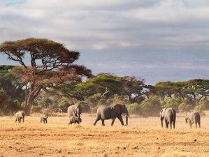 5 Days Best Tanzania Budget Camping Safari in Serengeti and Ngorongoro Crater