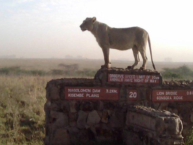 2 Days Maasai Mara Safari in Narok County, Kenya