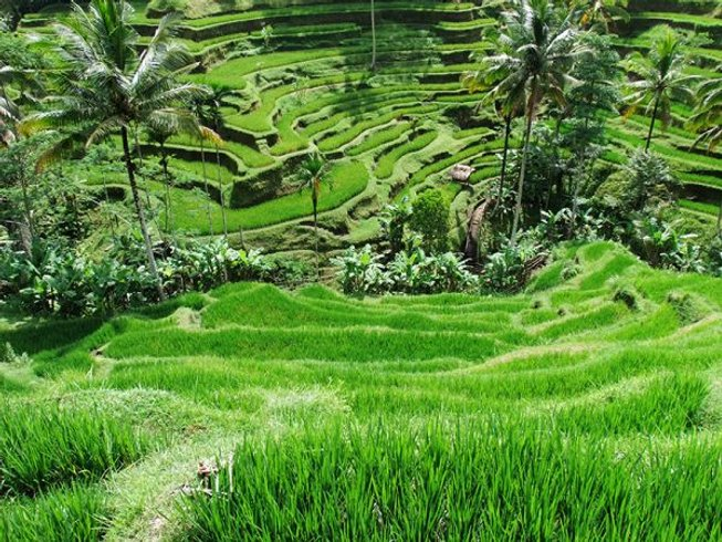 8 Days Balancing Yoga Retreat in Bali