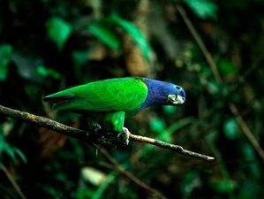 4 Day Wildlife Tour at Manu Wildlife Center in Puerto Maldonado, Madre de Dios Region