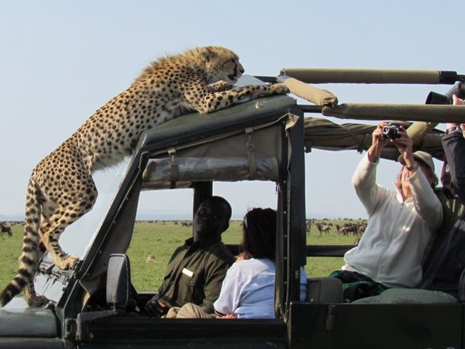 3 Days Guided Wildlife Kenya Safari