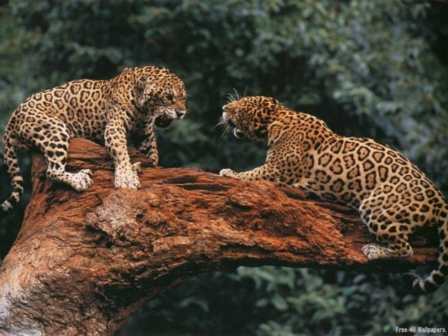 6 Days Big Five and Birdwatching Safari in Kenya