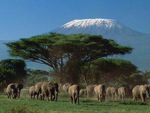 3 Days Private Safari in Amboseli National Park, Kenya