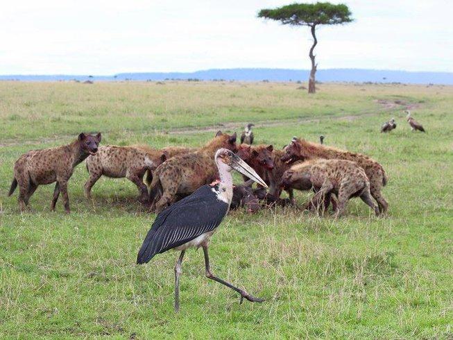 2 Days Wildlife Safari in Kenya