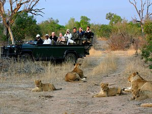 4 Days Kruger National Park Budget Safari in South Africa