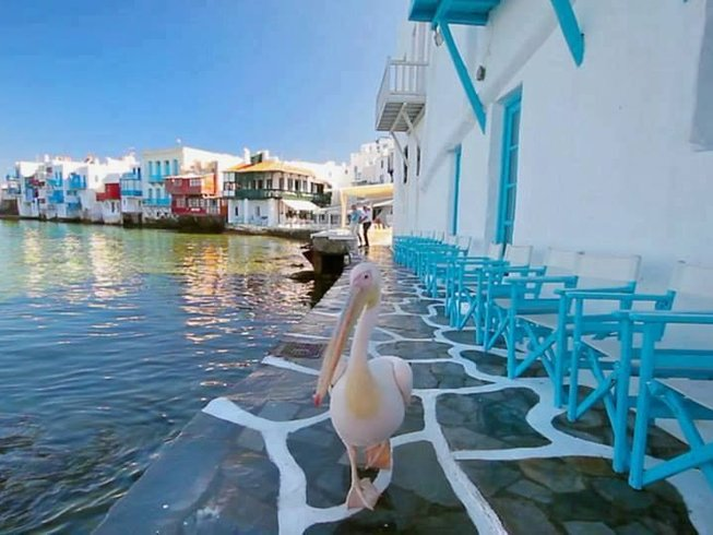 5 Days Fascinating Culinary Tour in Greece
