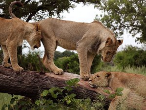 "9 Days ""Zambezi Wanderer"" Safari in Zimbabwe and Zambia"