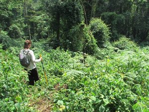 10 Days Rwenzori Mountain Hiking Uganda Safari