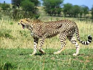 3 Days Serengeti and Ngorongoro National Parks Safaris in Tanzania