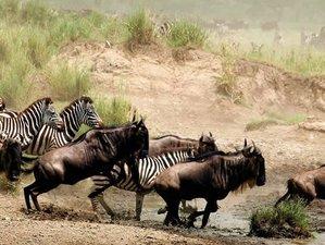 9 Days Beach Holiday and Masai Mara Safari in Kenya