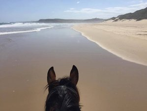 8 Days Horse Trail Safari on the Wild Coast, South Africa