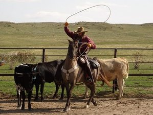 5 Days Authentic Dude Ranch Vacation in New Raymer, Colorado