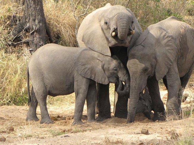 5 Days Kruger National Park Safari South Africa