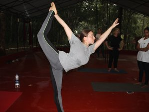 30 Days 300hr Yoga Teacher Training in Palampur, India