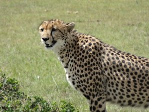 8 Days Best of Tanzania Wildlife Budget Group Safari