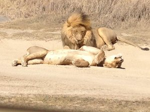 Big Five Safari 7 Days in Lake Manyara, Serengeti, and Ngorongoro Crater, Tanzania