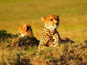 3 Days Amazing Joining Budget Safari in Maasai Mara National Park, Kenya