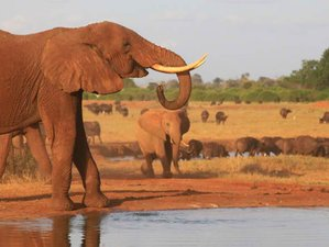 4 Days Budget Safari in Kenya
