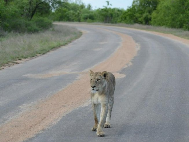 3 Days Game Safari in Kruger National Park, South Africa