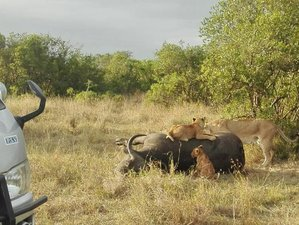7 Days Eco Friendly Safari in Kenya