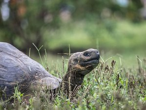 8 Day Galapagos Wildlife Adventure Land and Yacht Tour in Ecuador