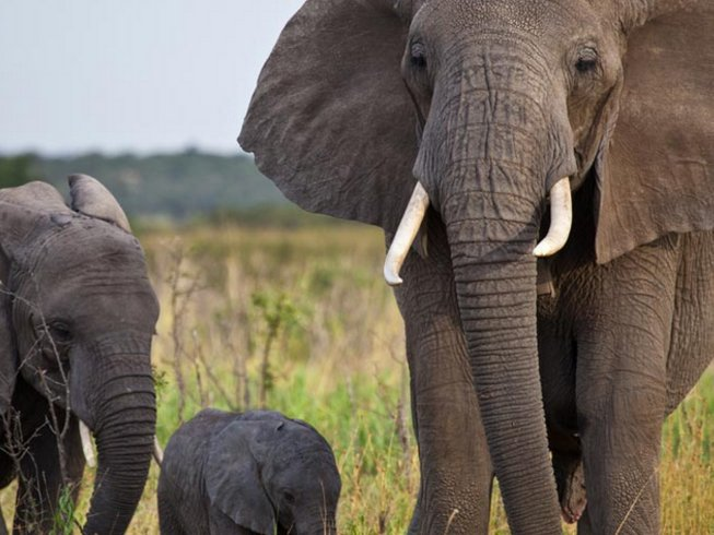9 Days All Alone Tanzania Safari