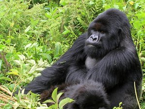 6 Days Mountain Gorilla Tracking Safari and Boat Riding Trip in Uganda