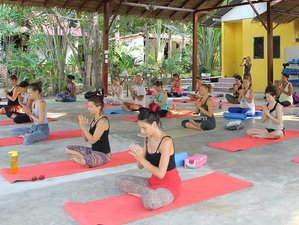 8 Days Premium Detox, Meditation, and Yoga Retreat  Thailand