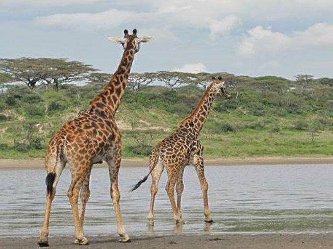 13 Days Wildlife Budget Safari in Kenya and Tanzania