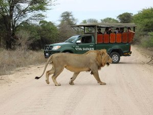 5 Days Exhilarating Budget Safari South Africa