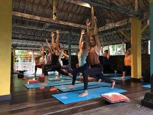 25 Days 200-Hour Hatha and Vinyasa Parahita Yoga Teacher Training in Canggu, Indonesia