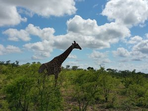 4 Days Pilanesberg and Sun City Safari North West Province, South Africa